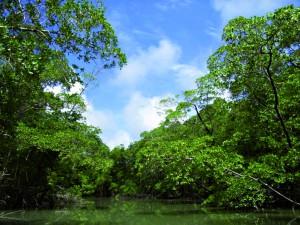 La forêt d'Emeraudes, en Amérique du Sud