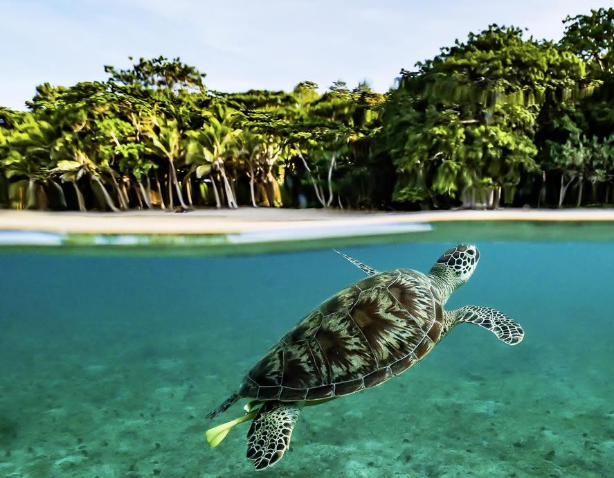 Tortue verte dans le lagon de Mayotte le plus grand lagon du monde